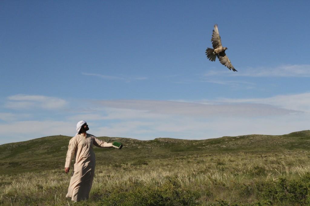Falcons (2)