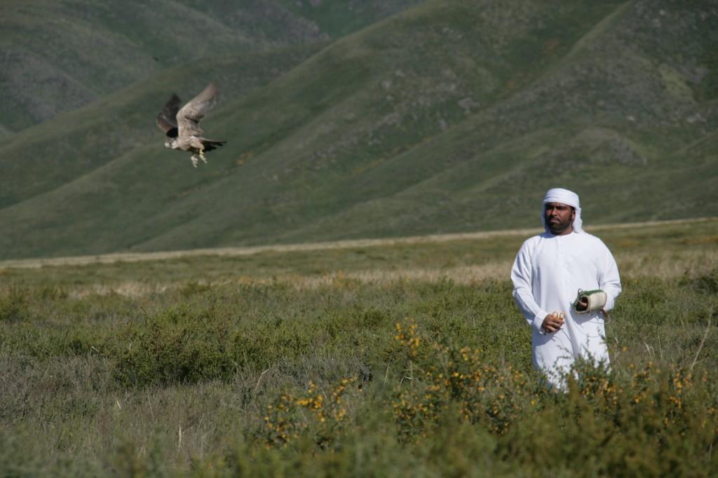 Falcons (4)